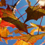 Fall Equinox Teleconference 2015