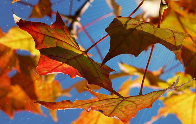 Fall Equinox 2015