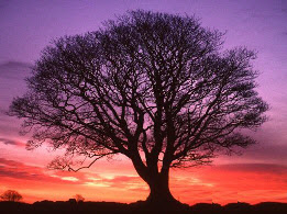 Meditation on a Tree