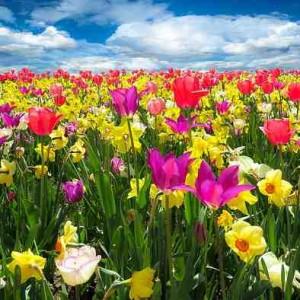 Spring Equinox Teleconference 2016 - Recording
