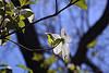 Spring Equinox Teleconference 2015 - Recording